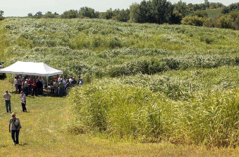 University of Iowa increases biofuel acres with miscanthus