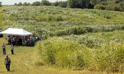 Study: Rethinking how to use farmland