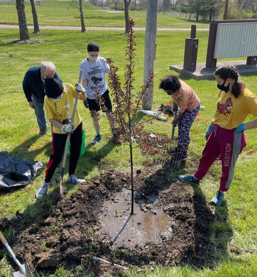 Volunteers plant trees at Maharishi International University