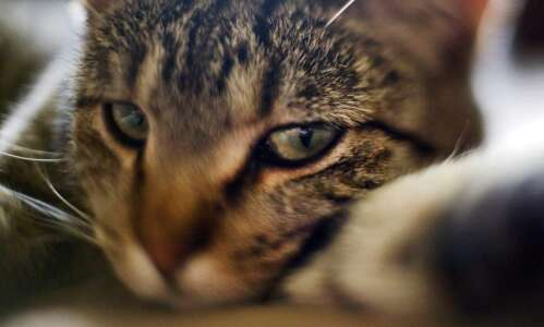 Experimenting with freelensing photography
