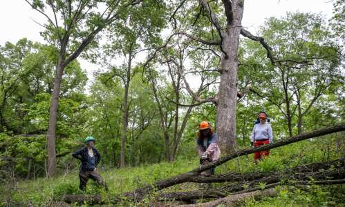 Photos: Chainsaw course aims to help women gain confidence with…