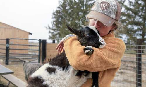 PuppyCow Goat Rescue in Riverside saves injured, special needs animals
