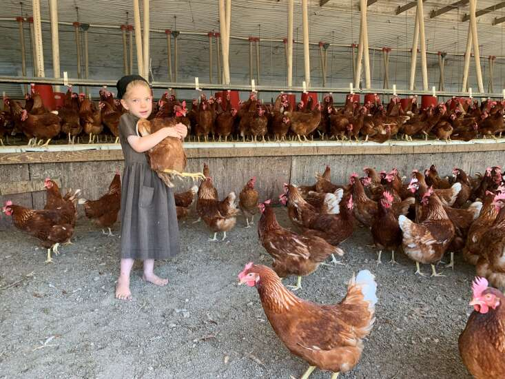 California law is transforming egg industry, producers say. Will it do the same for pork?
