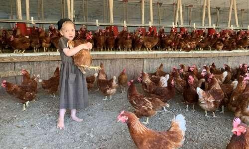 Egg producers scramble to capture California market. Will pork?