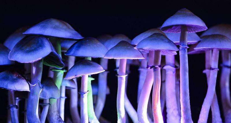 In Iowa, a peculiar coalition to legalize psychedelic drugs