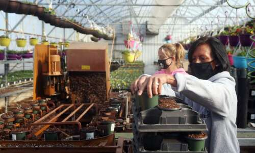 The gardener's gardener is ready for spring at Fairfax Greenhouse