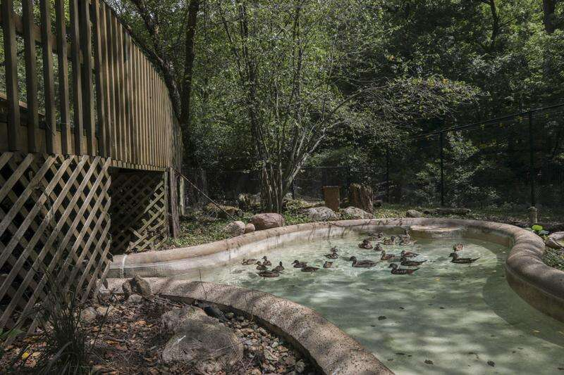 Meet the newest babies of the pandemic: The ducklings at Old MacDonald's farm