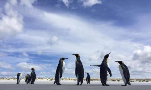 Some penguins poop pink, and more super poop facts