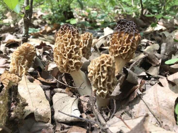 It's time to start planning that mushroom hunt