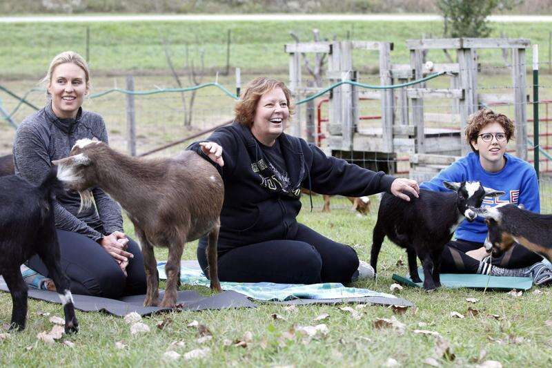 """Strike a goat pose: Yogis turn into """"gogis"""" at Coco's Ranch in Palo"""