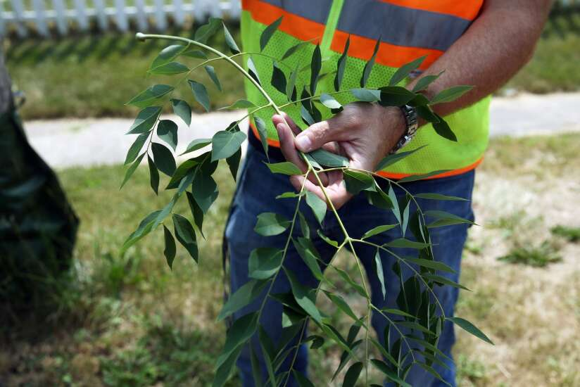 Tree inventory helps Cedar Rapids know which trees to replant
