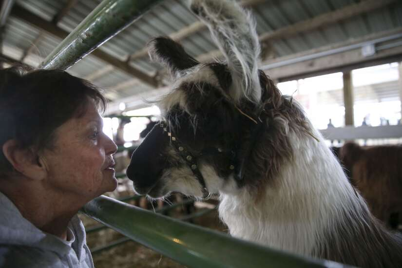 Putting the 'grand' back in grandstand: County fairs ready to welcome back public