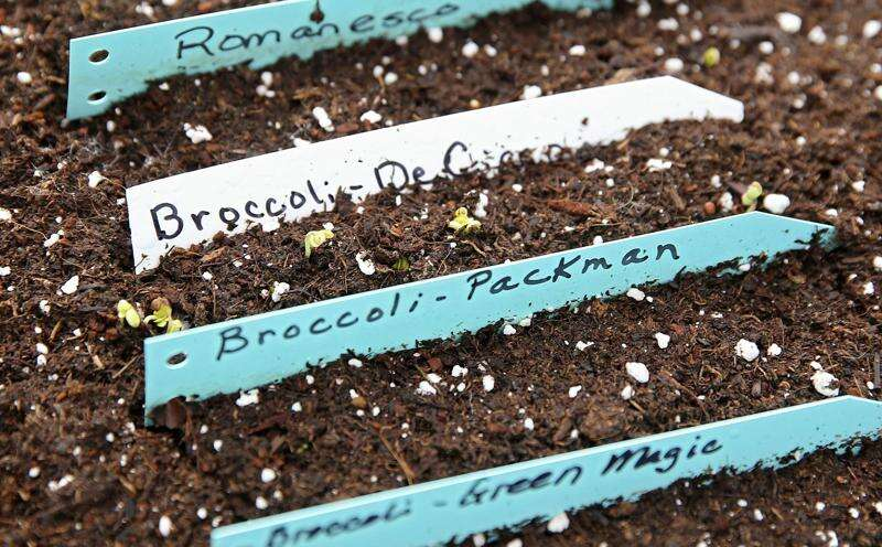 Local greenhouses survive winter blast, spring into new season