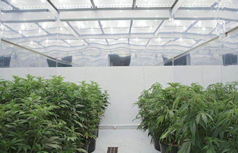 'Scofflaw and disorder' in Iowa's medical marijuana program