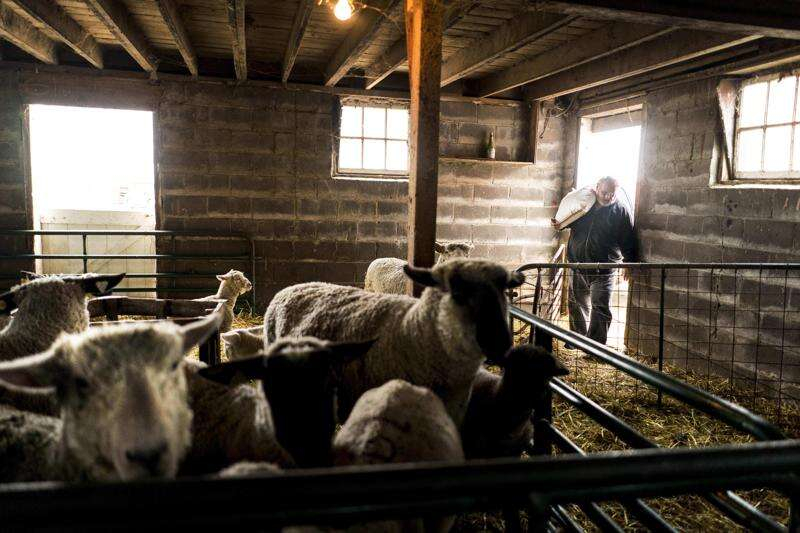 Bumper crops and tariffs pose double whammy for Iowa farmers