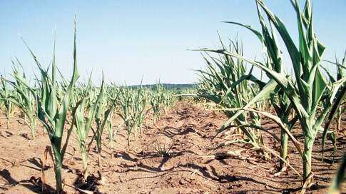 2012 Iowa drought now worse than '88