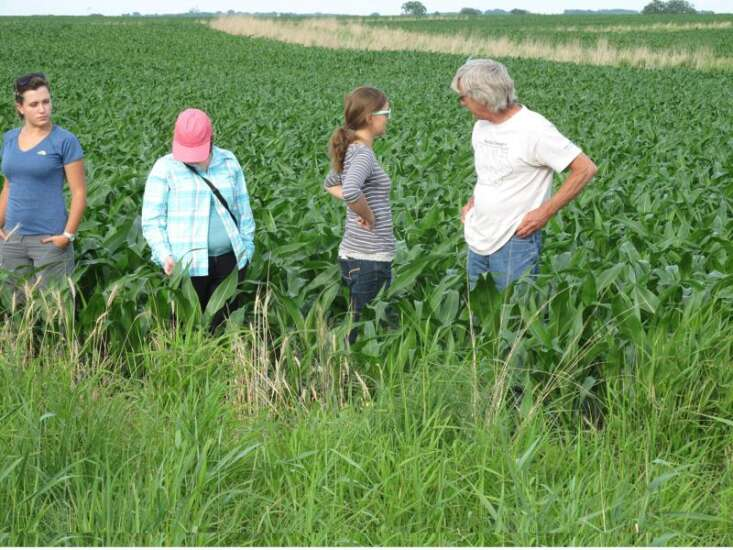 Seeing the benefits of cover crops, with radishes and rye