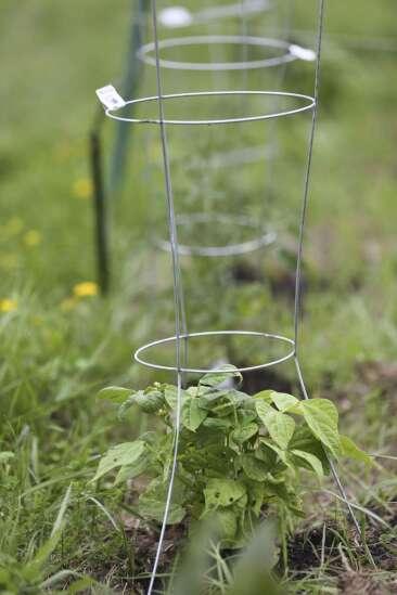 High school students create 20-plot garden for refugees living in Hiawatha