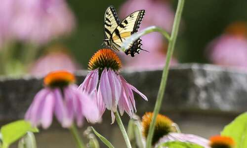 Test your butterfly knowledge with this quiz
