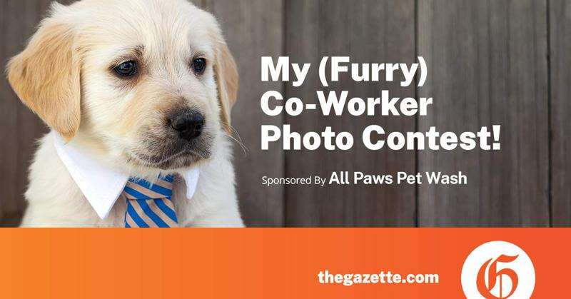 My Furry Co-Worker Contest
