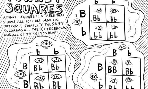How do we get different eye colors? Color these puzzles…