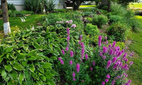 This Iowa gardener's guide to growing: Plant what you like