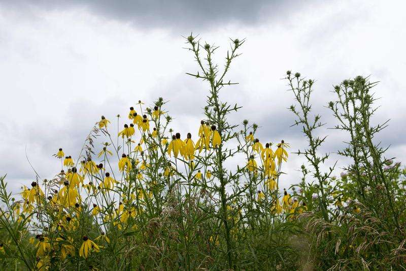 Help is available for Iowa farmers doing prairie restoration