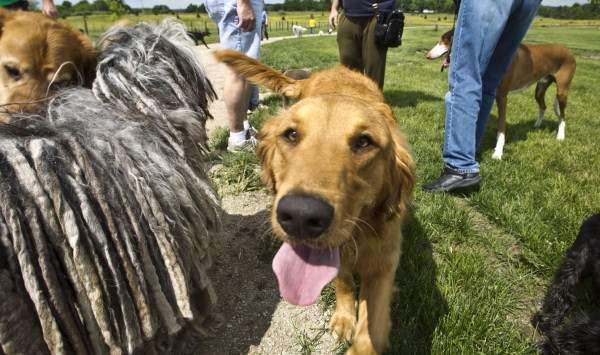 Unleashes rise as owners seek to socialize their pets in dog parks