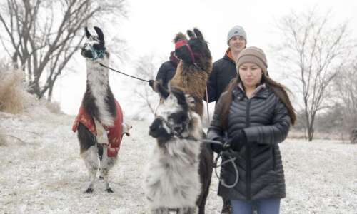 Hoofing it with llamas? You can do that in Eastern…