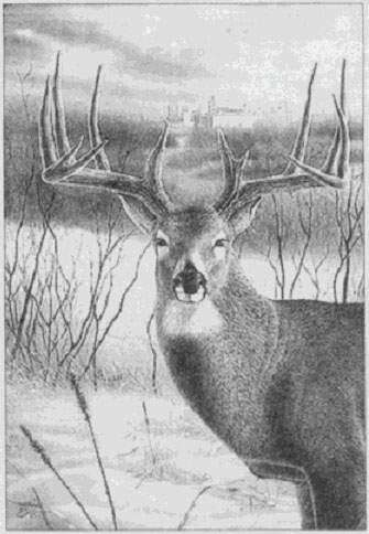 Time Machine: The Watertruck Buck roamed Cedar Rapids before fatal encounter