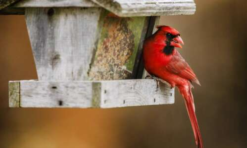 Marion to celebrate bird-friendly designation with event on Saturday