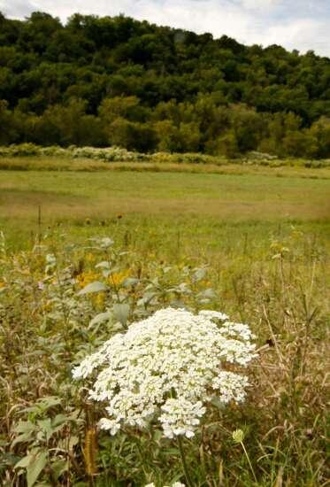 Environmental groups endorse long-term Iowa water quality funding