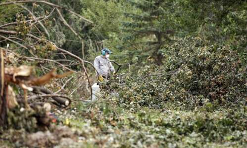 Trees Forever CEO discusses efforts to 'ReLeaf' across Linn County