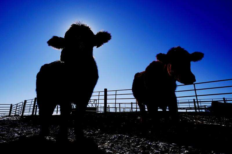 Shoppers and farmers seethe over higher beef prices