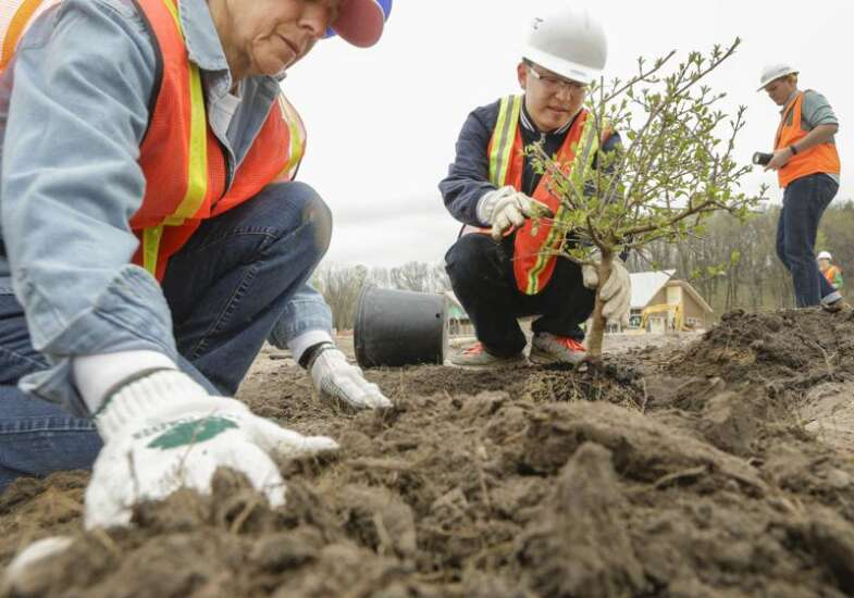 New trees and teen jobs combine in deal approved in Cedar Rapids