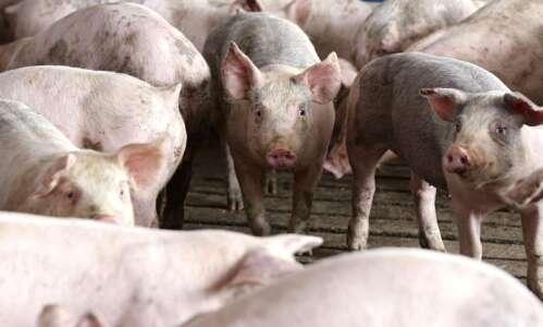 Pork group asks USDA to support faster slaughterhouse speeds