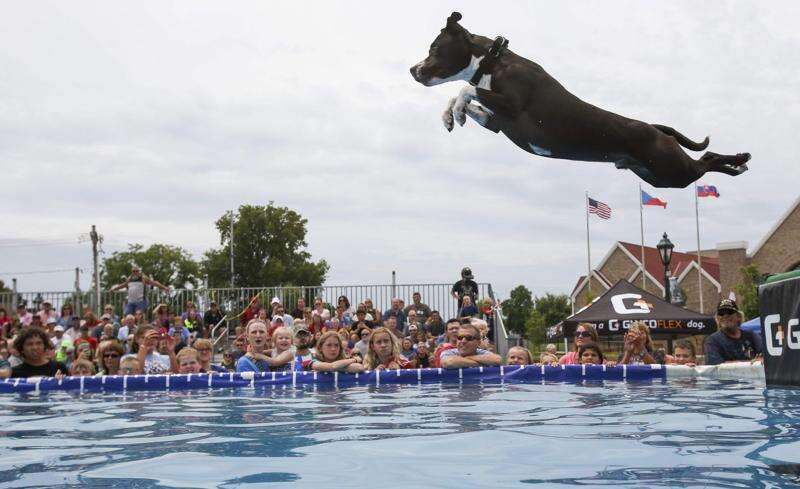 Cedar Rapids Freedom Festival firing up with parade, DockDogs, concerts and more
