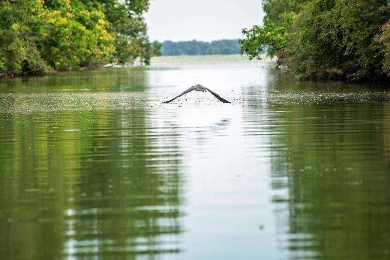 Treading Water: Millions of dollars riding on water quality in the Midwest