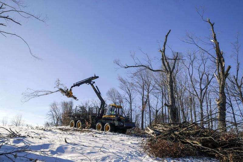 Derecho devastated trees in hours, but reforestation plan will take months