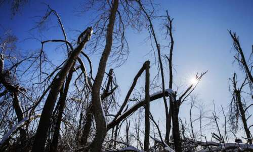Specter of derecho sidelines tax increase for Iowa forest reserves