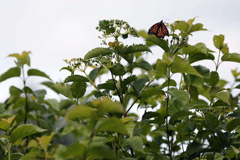 How to create your own butterfly garden in your yard