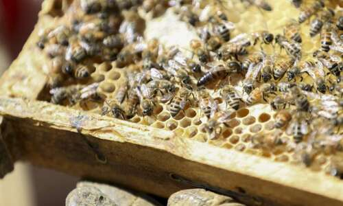 The ins and outs of keeping beehives