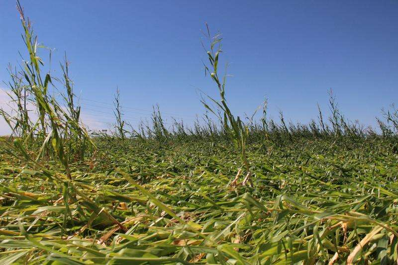 Iowa storm devastates farms as nearly half of state's row crop acres damaged