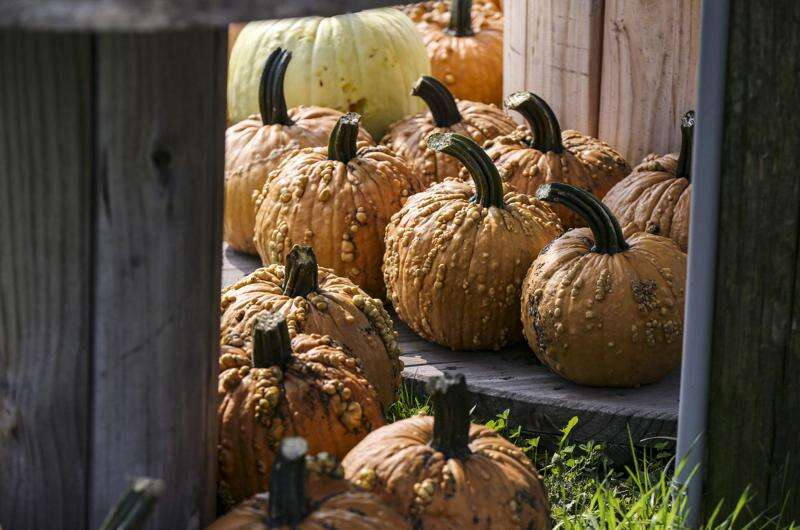 Iowa's pumpkin patches, haunted houses adapt to pandemic's limits