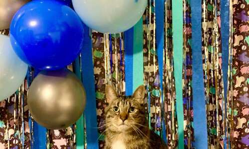 Make your own glam photobooth background for New Year's Eve