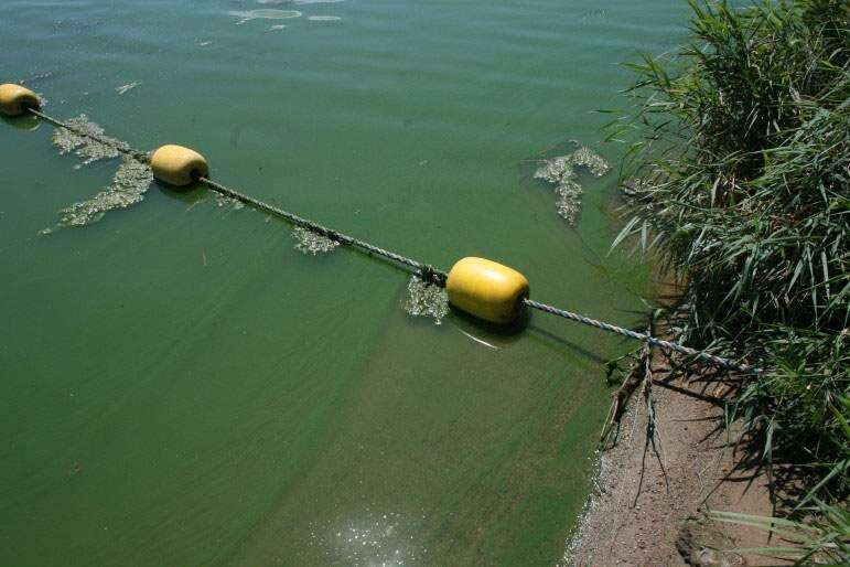 Blue-green algae in Iowa — it's smelly and tricky and a health hazard