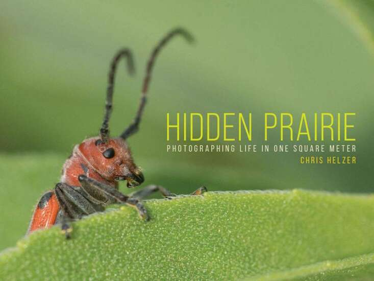 """Ecologist captures life on the prairie, one photo at a time in new book, """"Hidden Prairie"""""""