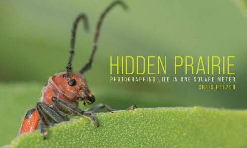 Ecologist captures life on the prairie, one photo at a…