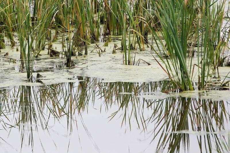 Conservation bond garners overwhelming approval