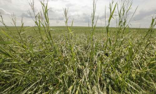 Millions of acres of Iowa corn, soybean crops heavily damaged…
